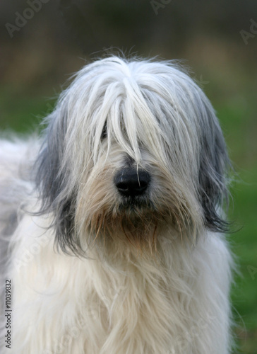 Fotografie, Obraz  portrait de berger polonais de plaine
