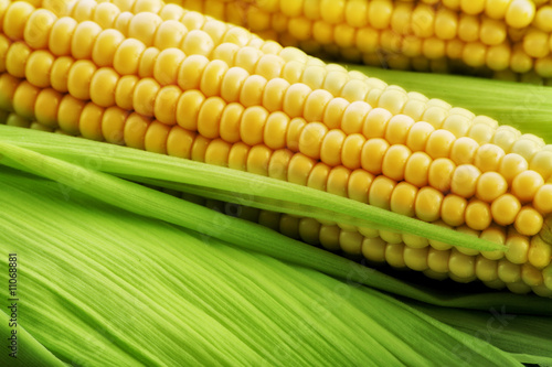 Fotomural yellow corn