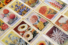 Seed Packets -flower2