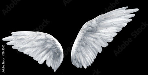 Papiers peints Oiseau angel wings
