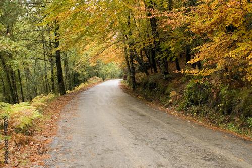 Tuinposter Weg in bos Autumn colors