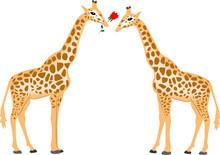 Valentine Card With Giraffes