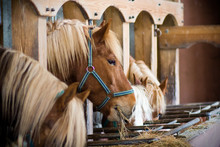 Many Horses In A Row Eating At The Stables