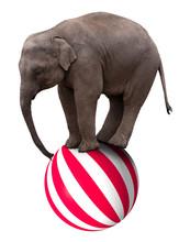Baby Elephant On Ball