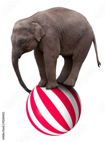 Photo  Baby elephant on ball