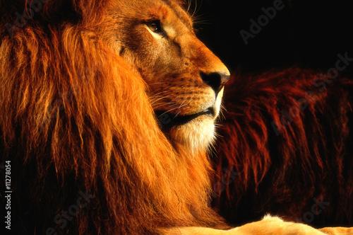 Foto op Plexiglas Leeuw King of the Jungle
