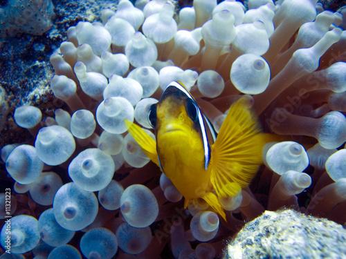 Poster Coral reefs nemo fish