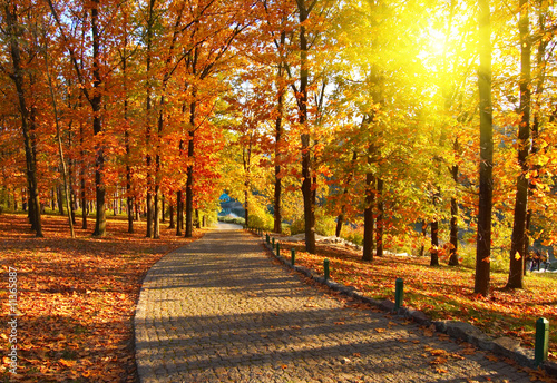 Foto op Canvas Herfst Autumn in the park