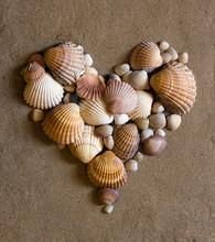 Shell Heart On Sand
