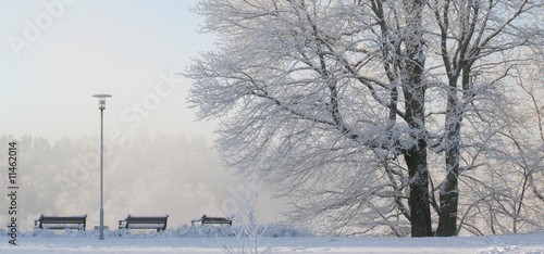 Aluminium Prints Birch Grove winter park scene