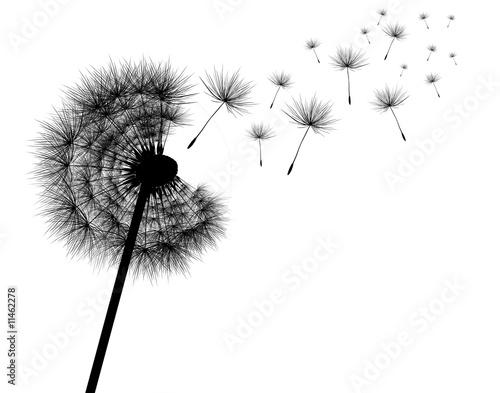 sylwetka-dandelions