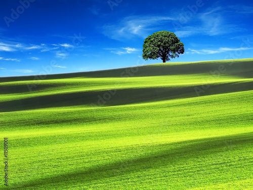 Poster Lime groen Green field with the blue sky