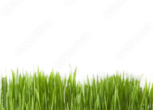 Deurstickers Gras Grass macro