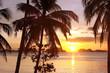 Coucher de soleil sur les cocotiers