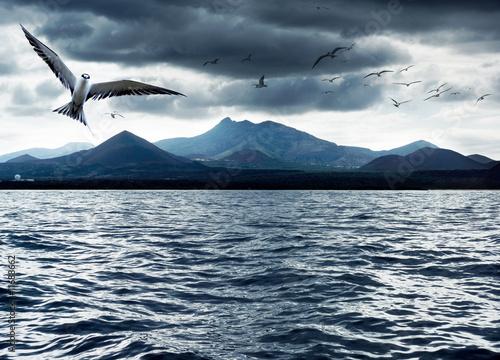 Foto-Schiebevorhang (ohne Schiene) - Ocean Birds (von Kwest)