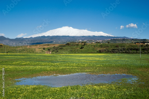 Vászonkép  flowered grass with rainwater and snowy volcano Etna