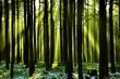Frischer Wald mit Sonnenstrahlen