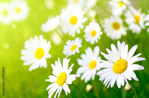 Foto-Schiebegardine ohne Schienensystem - Daisy flower