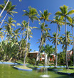 Coconut Palm Trees at a Beautiful Tropical Resort