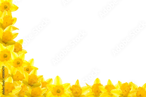 Deurstickers Narcis Daffodil Border