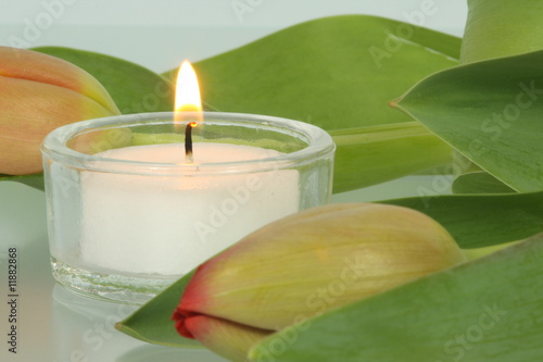 Akustikstoff - Kerze mit Tulpenknospe