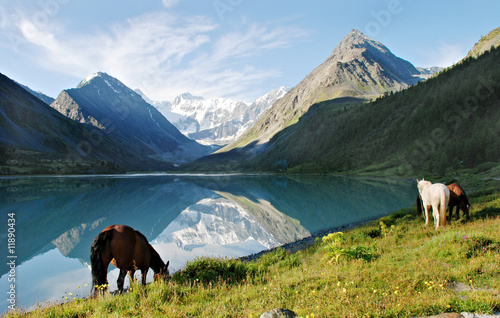 Photo sur Aluminium Bleu vert Horses near mountain lake Ak-kem, Altai, Russia