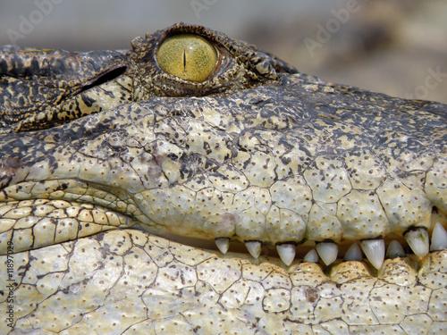 Deurstickers Krokodil Crocodile Farm. Thailand.