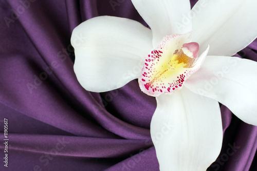 biala-orchidea-na-gladkiej-fioletowej-satynie