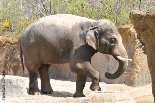 Canvas Prints Elephant Elephant playing with dirt