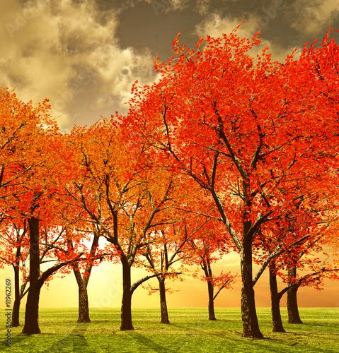 Poster Lichtroze Beautiful autumn