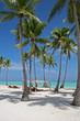 Tropical Scene On The Beach Of Caribbean Sea