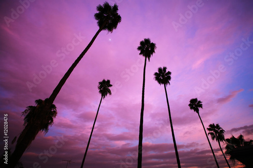 Poster Los Angeles High palm trees over beautiful pink sunset sky