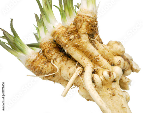 Fotografie, Obraz  fresh horseradish