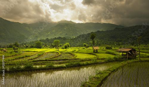 Foto op Aluminium Bali Bali - rizière
