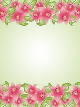 Spring Background With Lilium Set #4