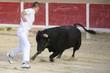 Stierkampf in der Arena von Saintes Maries de la Mer