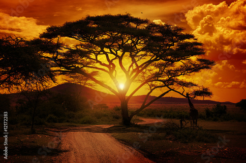 Wall Murals Africa Africa Sunset
