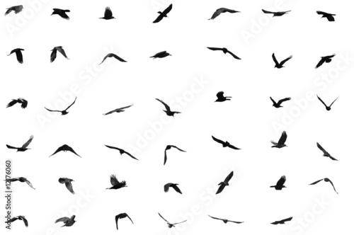 birds for background Canvas Print