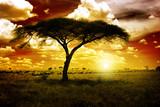 Fototapeta Sawanna - Africa Sunset