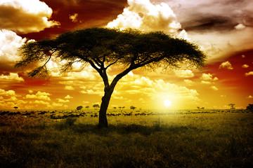 Fototapeta Africa Sunset