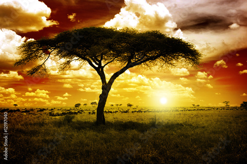 Deurstickers Afrika Africa Sunset