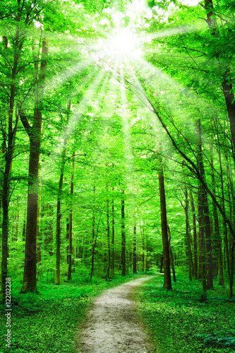 Fototapeten Wald nature. path in forest with sunshine