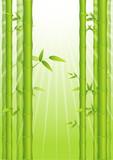 Fototapeta Sypialnia - Bamboo