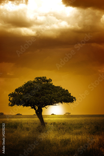 Poster Campagne Africa Sunset