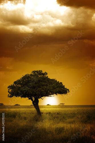 Foto op Canvas Bomen Africa Sunset