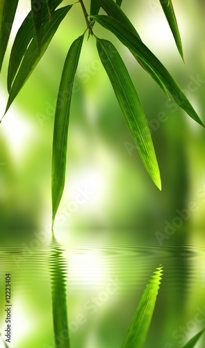 Papiers peints Vert chaux bamboo leaf with reflection in the water,Zen atmosphere.