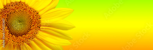 In de dag Zonnebloem Sunflower background