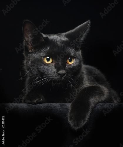 Foto-Flächenvorhang ohne Schienensystem - Black cat with yellow eyes (von Pelana)