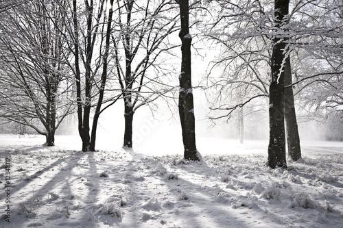 zimowy-krajobraz-z-cieniami-drzew