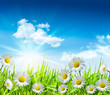 Leinwanddruck Bild Daisies and grass with bright blue sky